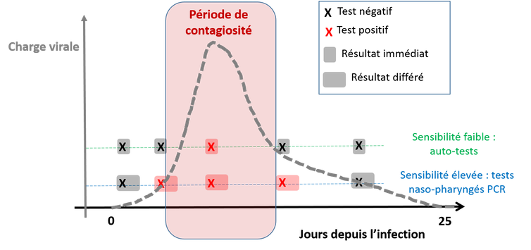 Figure 1: Évolution de la charge virale au cours de l'infection et positivité des tests.